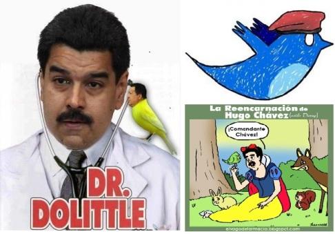 Verkiezingen Venezuela | Chávez gereïncarneerd als vogeltje